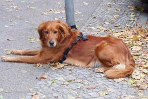 wartender hund, neukölln,herbst in neukölln,laub