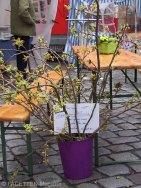 2. ostermarkt schillerkiez, pro schillerkiez e.v., schillermarkt, neukölln, japanische kirsche