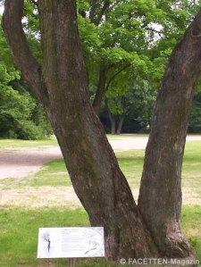 baumlehrpfad volkspark hasenheide neukölln