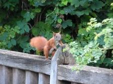 eichhörnchen, hasenheide, rixdorfer teich, neukölln