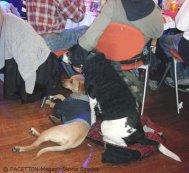 1_obdachlosenfest 2012_estrel neukölln