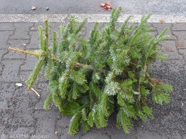 best 28 bsr weihnachtsbaum wohin mit dem alten baum bsr abholtermine heiligensee bsr holt. Black Bedroom Furniture Sets. Home Design Ideas