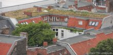 begrünte dächer_rathaus-turm neukölln