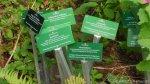 3_garten cafe botanico neukölln