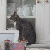 interieur_pee pees katzencafe neukölln