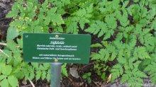 süßdolde_garten cafe botanico neukölln