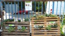 vertikale gärten_nachbarschaftsgarten prachttomate_neukölln