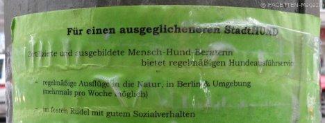 ausgeglichener stadthund_gassi-service_neukölln