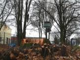 robin wood-baumhaus_a100 neukölln