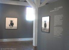 2_kühe in europa_museum neukölln