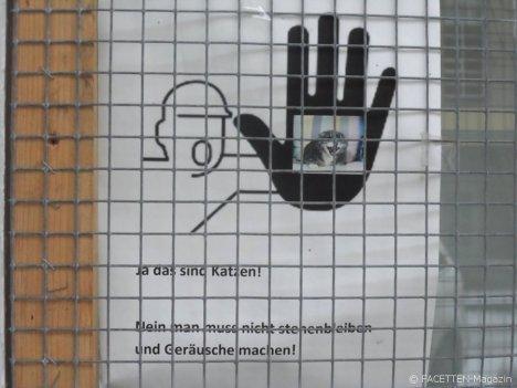 katzen_neukölln