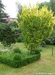1_offene gärten 2014_kirchgasse_berlin-neukoelln