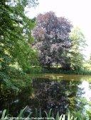 späth arboretum_berlin-treptow