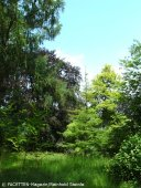 späth-arboretum_berlin-treptow