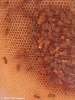 bienen_neuköllner honig manufaktur