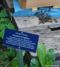 honigbienen_cafe botanico neukölln