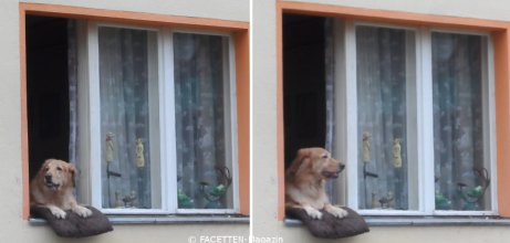 hund im fenster_neukölln