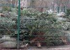 futter-weihnachtsbäume_tierpark hasenheide_neukölln