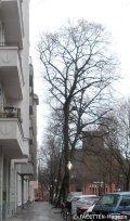 schillerpromenade_genezareth-kirche_neukölln