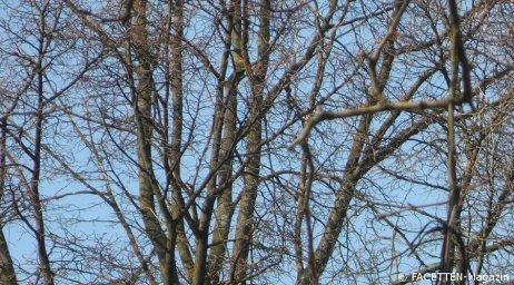 bäume_neukölln