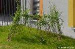weidenjurten_kita sternengarten neukölln