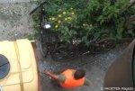 straßenbaum-bewässerung_neukölln