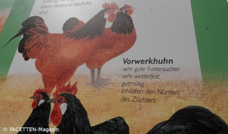 vorwerkhuhn_tierpark neukölln