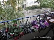 balkon heidelberger str_neukölln