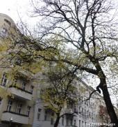 dezemberlaub am lindenbaum_neukoelln