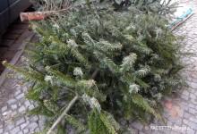 bsr-weihnachtsbaum-abholung neukoelln