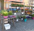 blumen und mehr_die dicke linda-wochenmarkt_neukoelln