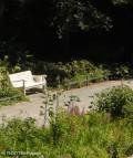 100 sonnenblumen_koernerpark neukoelln