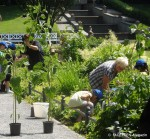 pflanzaktion sonnen-grundschule_100 sonnenblumen koernerpark_neukoelln