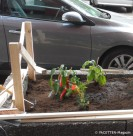 strassenacker-pflanzung_gartenarchipel sonnenallee_neukoelln