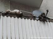 balkonien-werbellinstr-neukoelln